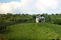 landschaft-mettenheim